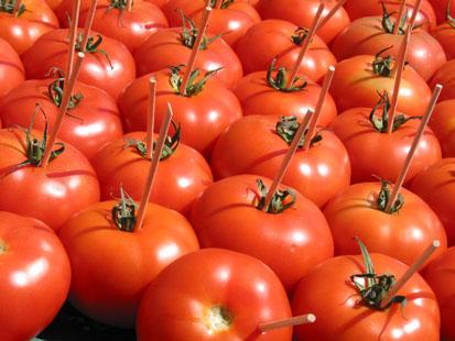 Préparation Fête de la tomate